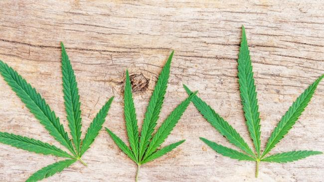 Cannabis ist jetzt in der ACT legalisiert – hier ist, was Sie wissen müssen