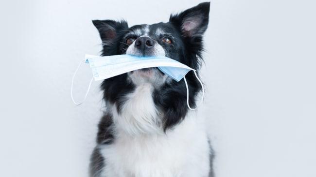 Laut Forschern müssen Hunde und Katzen möglicherweise gegen COVID geimpft werden