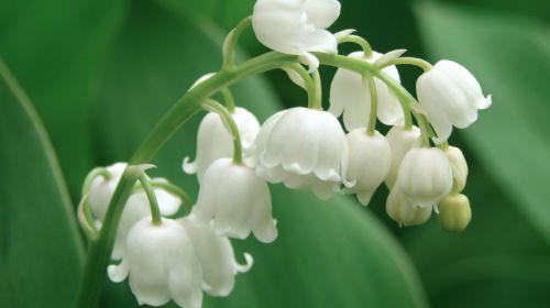 Die wichtigsten Giftpflanzen im Garten