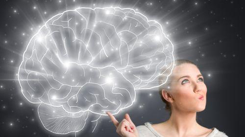 Gehirn: Mythen und überraschende Fakten